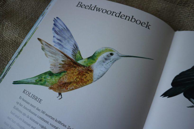 De bijzondere duif - beeldwoordenboek