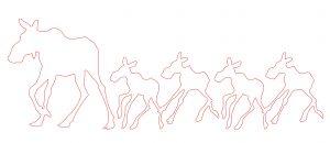 mama-moose-calves