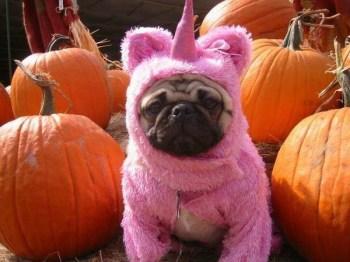 raisons de ne pas fêter Halloween