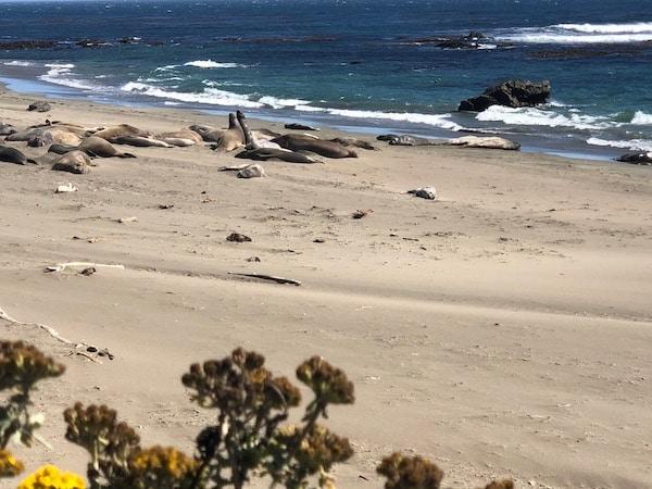 Californie lions de mer