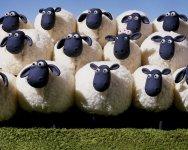 photos-shaun-le-mouton-7