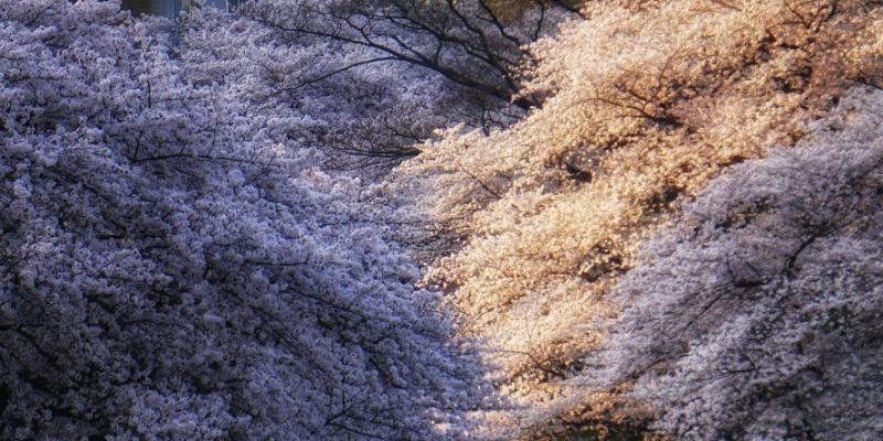 Japón. Cuadernos de viaje de una madre gemelar. Tercera Semana (de tres)