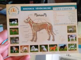 amulette-veterinaire-jeux-mamanmi-fevrier2018 22