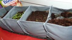 J'avais des graines plantés la semaine dernière qui ont poussées un peu je vais les utilisées ;-)