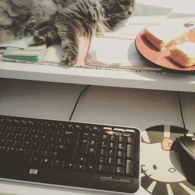 Pendant la sieste je mange, je travaille et je fais de la zoothérapie...