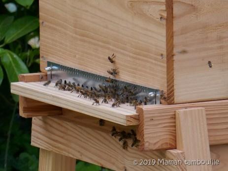 abeille02