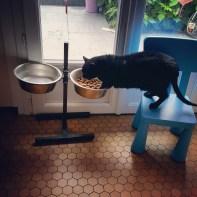 le chat cascadeur
