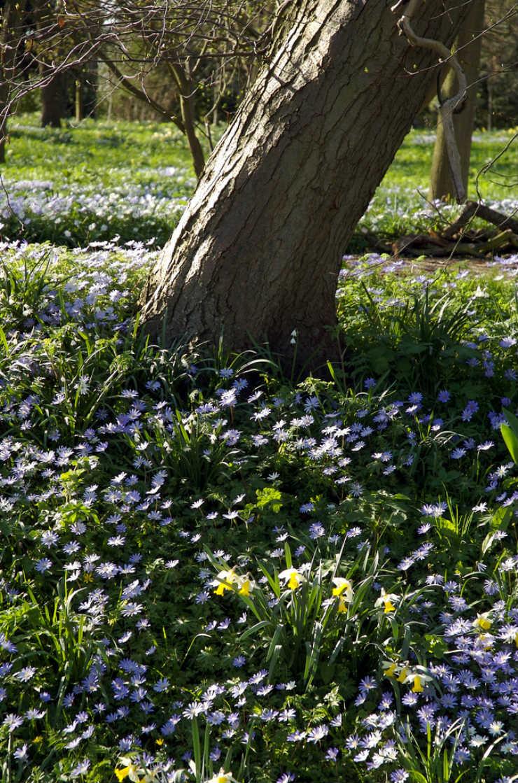 tree-spring-via-mamanushka-blog