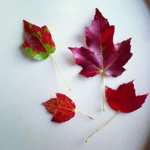 MAMANUSHKA.COM || Favourite Things About Fall || Autumn Beauty || Leaf