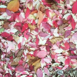 MAMANUSHKA.COM || Favourite Things About Fall || Autumn Beauty || Leaves