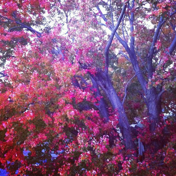 fall-autumn-fav-things-my-neighbours-tree-via-mamanushka-blog