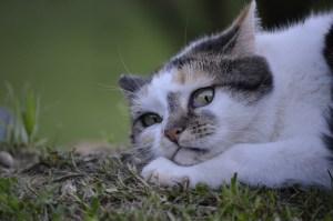 cat-2363809_1920