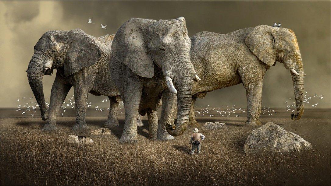 mammal-3218712_1280