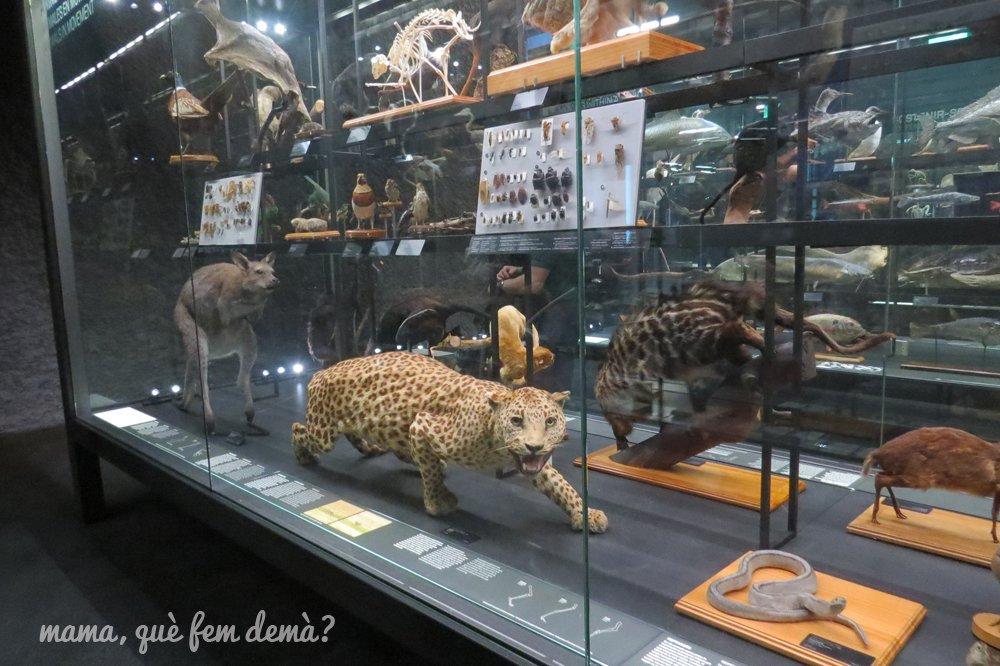 museublau08