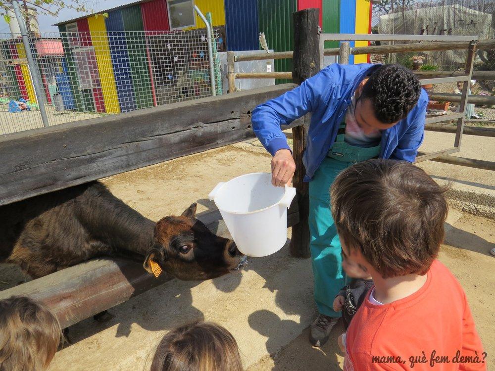 Monitor dando de beber leche a un ternero mientras los niños miran en Granja Can Pidelaserra