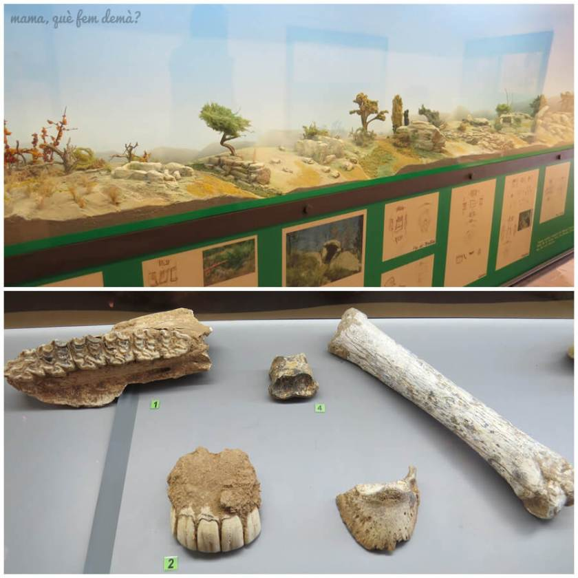 museu_moia02