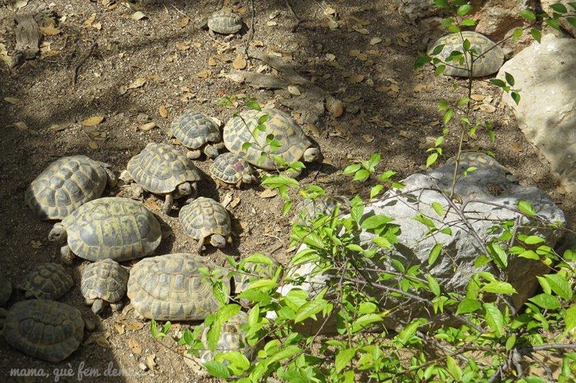Tortugas en el CRARC