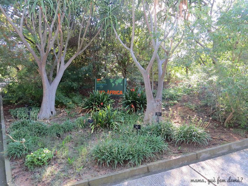 jardi_botanic01