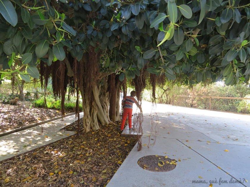 jardi_botanic02