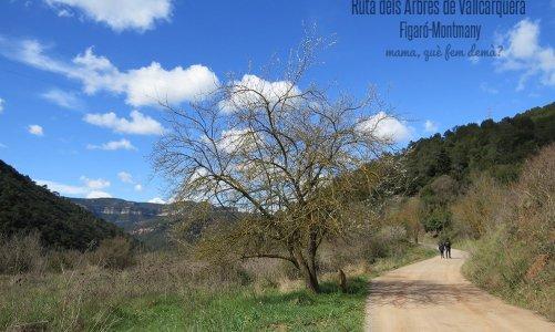 Ruta del Arbres de Vallcàrquera al Figaró-Montmany