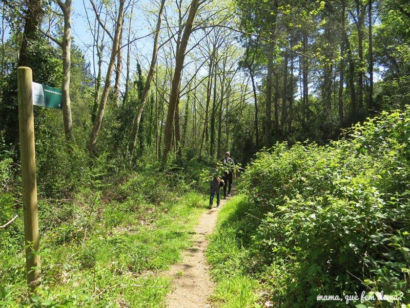 excursión del gegants del bosc i la cova d'en Daina