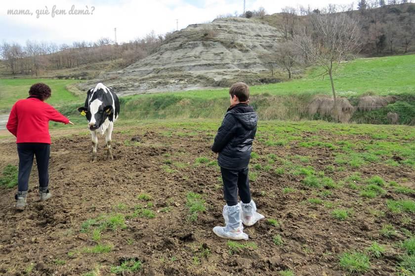Mi hijo se acerca a una de las vacas de la Granja Cal Rei