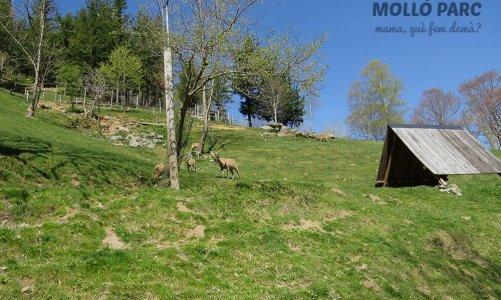 Molló Parc, parque de animales en el Pirineo de Girona