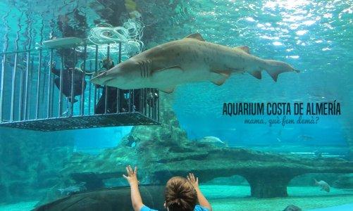 Los tiburones del Aquarium Costa de Almería