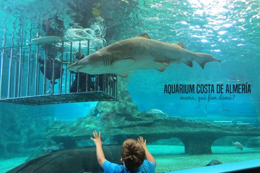 aquarium_costa_almeria00