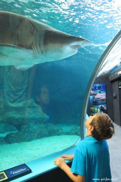 Mi hijo observando un tiburón toro.