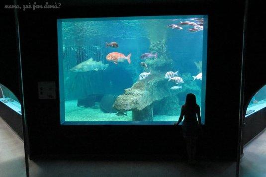 aquarium_costa_almeria09
