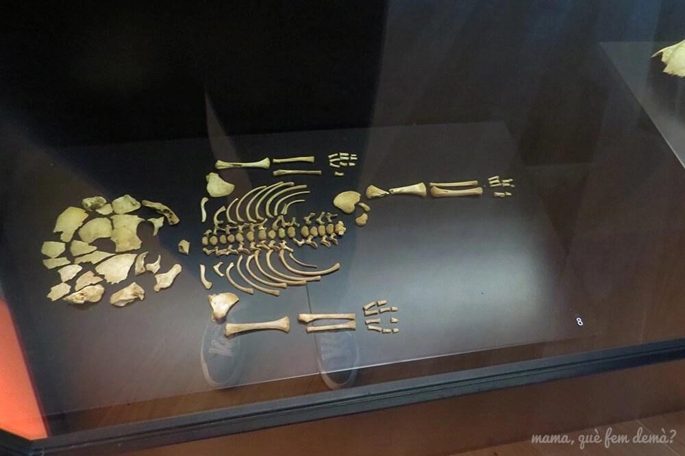 Esqueleto de un ibérico en el museo del Poblat ibèric Ca n'Oliver de Cerdanyola del Vallès