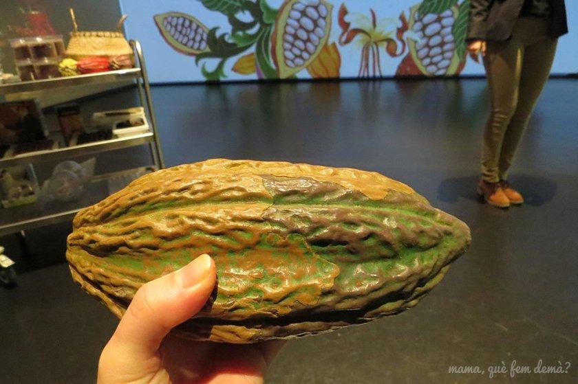 Fruto del cacao en el Espai Xocolata Simón Coll