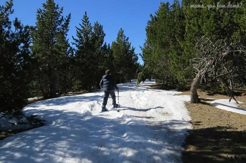 Niño en raquetas de nieva en Rasos de Peguera