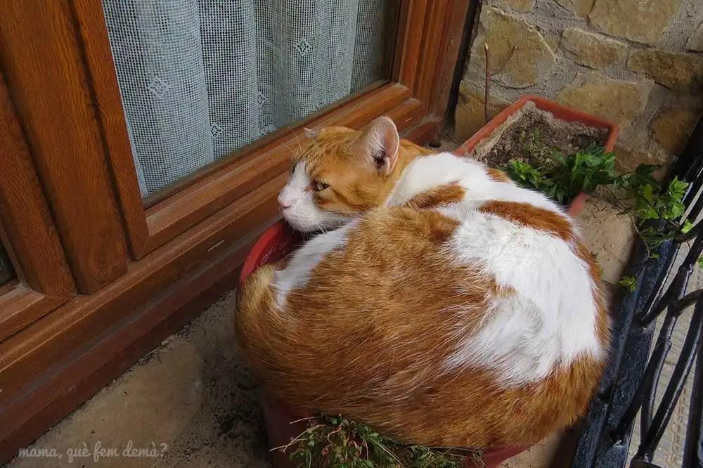 gato durmiento encima de una maceta