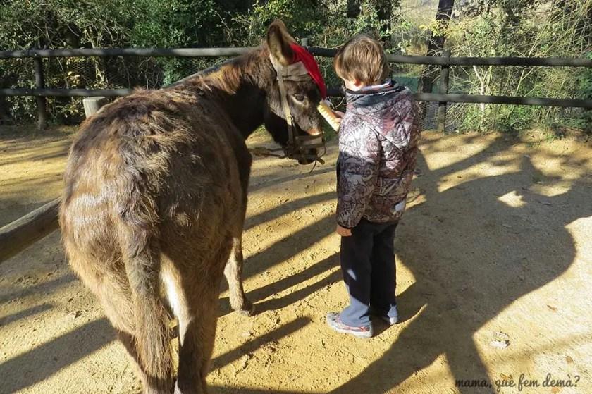 niño cepillando un burro en Rukimon