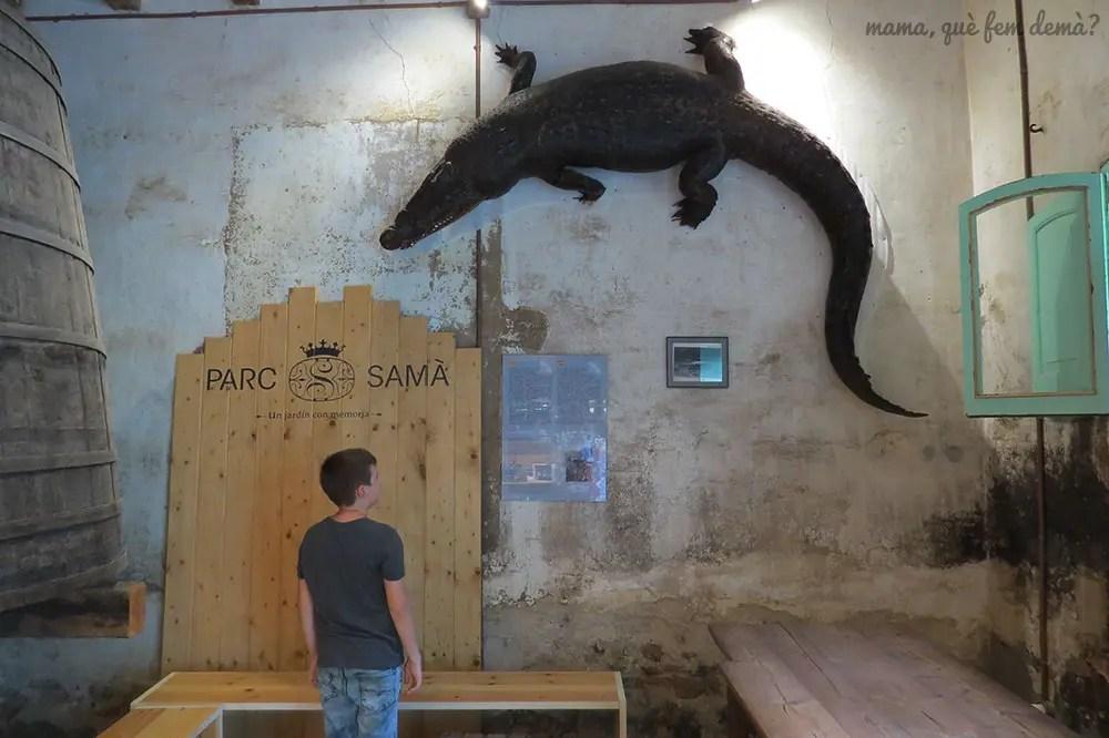 niño mirando el cocodrilo disecado del bar del Parc Samà