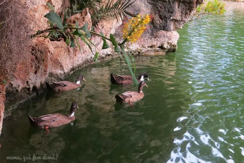 Patos nadando en el lago del Parc Samà