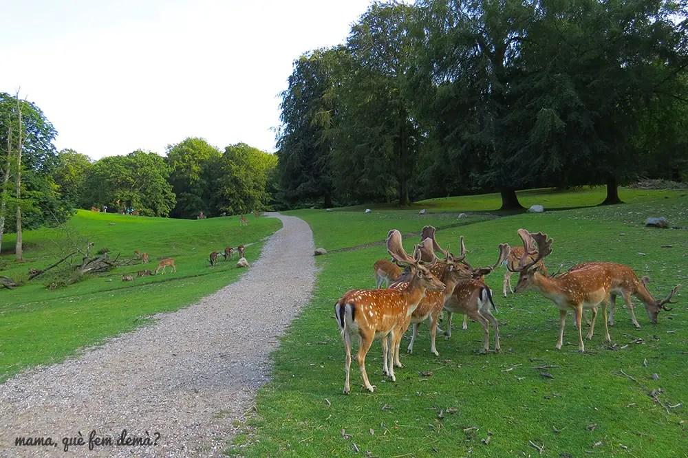 ciervos del parque de Marselisborg