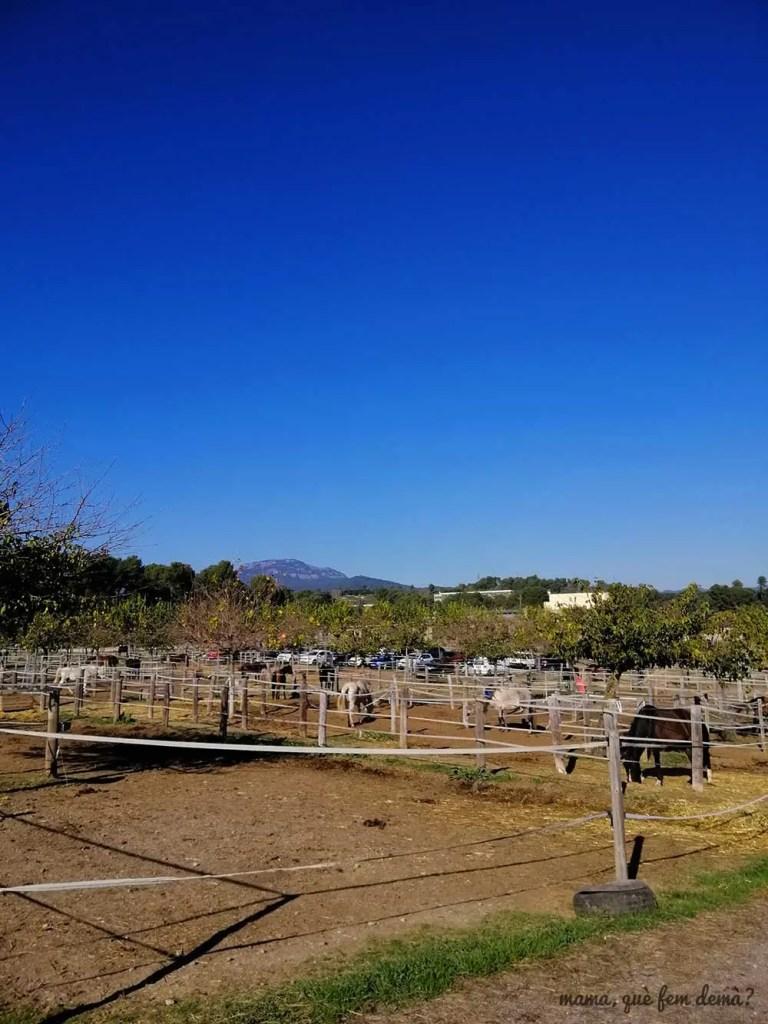 caballos de la hipica la granja de Terrassa