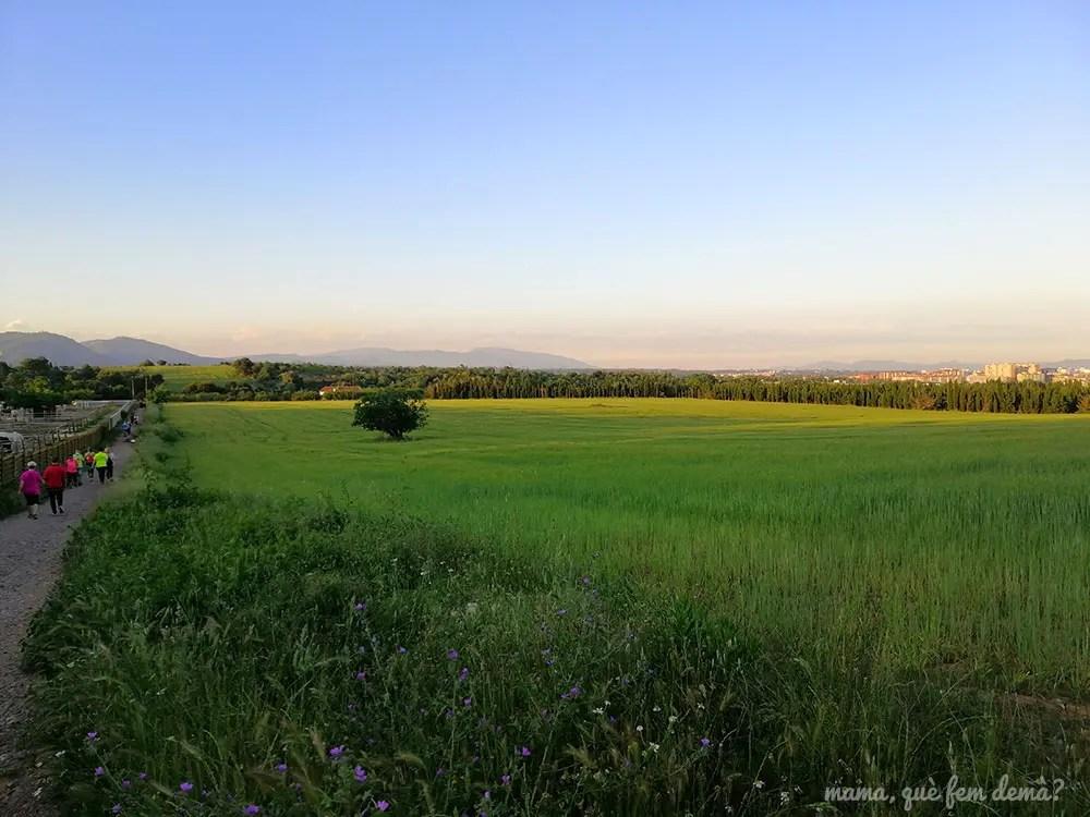 Campo de trigo al lado de la hípica La granja