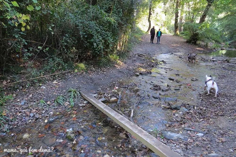 Tablón de madera para cruzar la riera de Vallvidrera en Molins de Rei