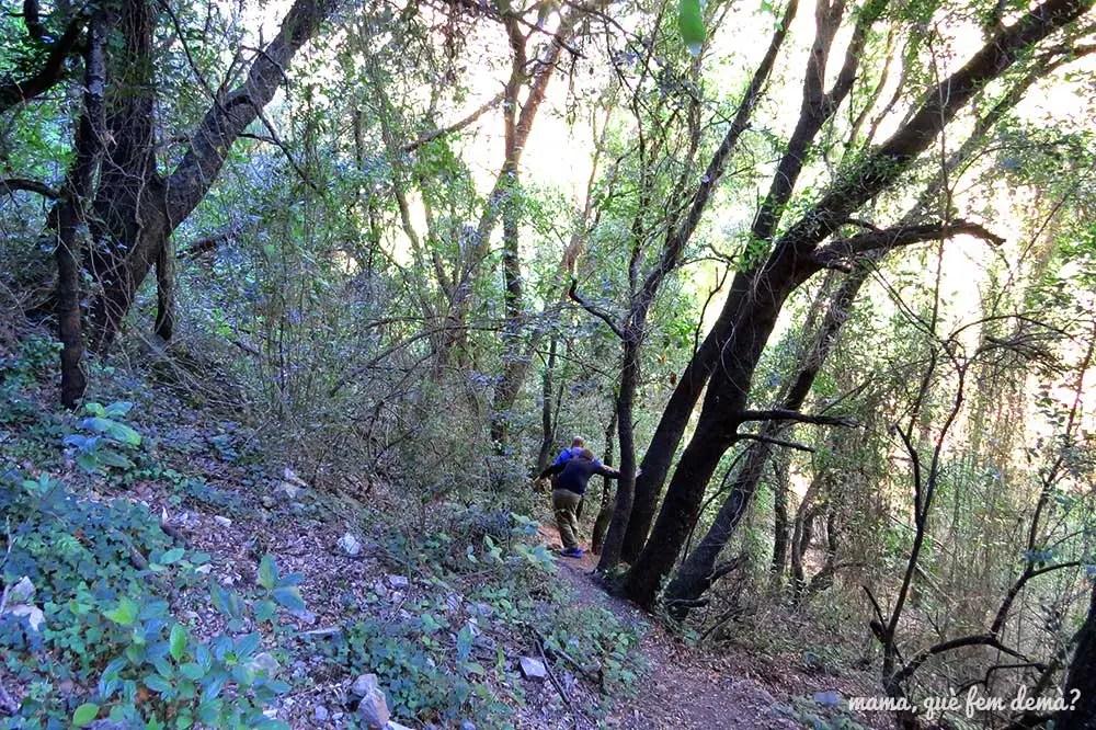 Bosque del camino que lleva al Santuari del Foix