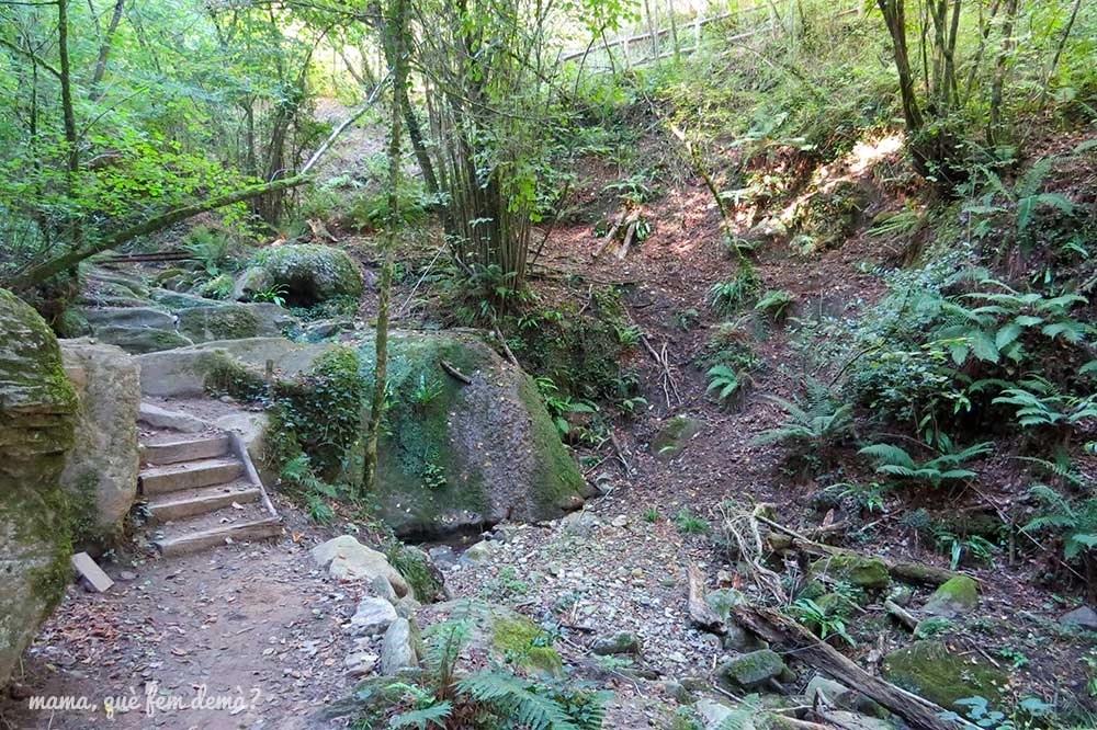 Bosque en el Gorg de Santa Margarida en les Planes d'Hostoles, Garrotxa