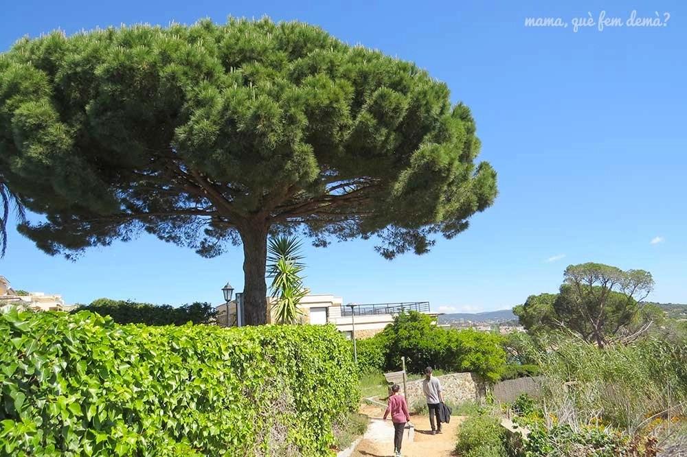 Paseo entre urbanizaciones en el camí de ronda de Sant Feliu de Guíxols a la platja de Sant Pol