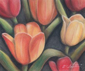 "Diana Calautti, Tulips at the Brooklyn Botanical Garden, Drawing (charcoal), 11""x14"", $400"