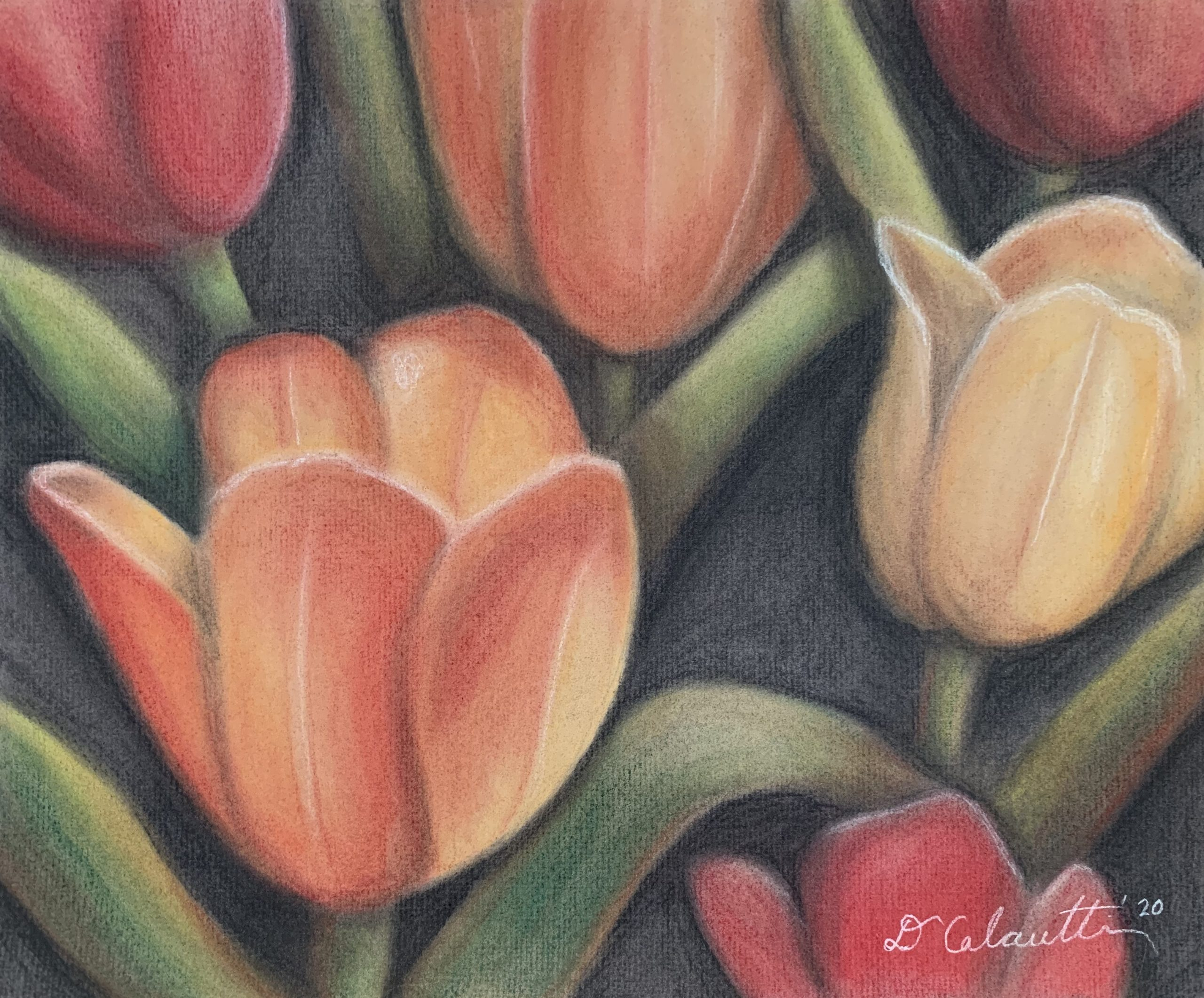 "Diana Calautti, Tulips at the Brooklyn Botanical Garden, Drawing (charcoal), 11""x14"", $400"