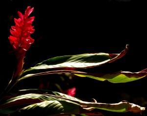 """Peggy Opalek, Flower, Photograph, 11""""x14"""", $375"""