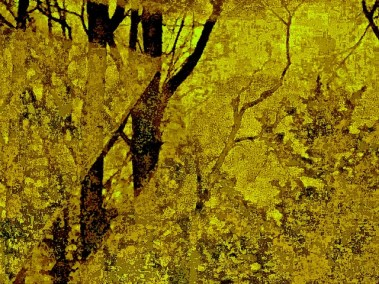 """Steven Levine, Glass Protects This Forest, Photograph, 12""""x15"""",$350"""