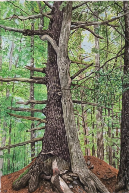 "Jim Maciel, Entwined, Watercolor, 24""x30"", $250"